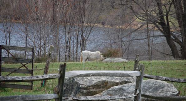 horses-glynwood