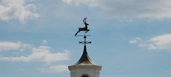 reindeer-glynwood
