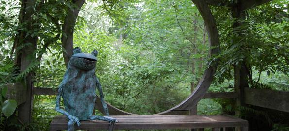 stonecrop_frog