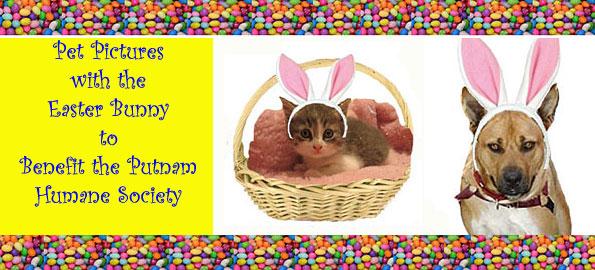 pet_pics_bunny