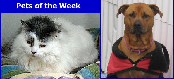 pets_of_week