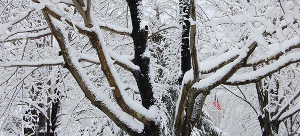 snowy_tree_american_flag