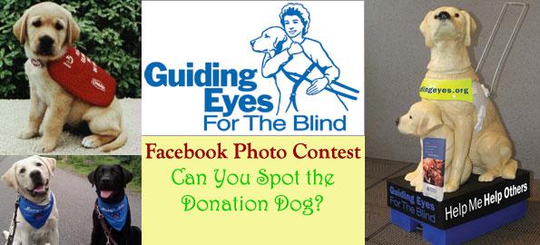 spot_the_donation_dog