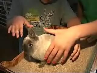 bunnyrabbit.jpg