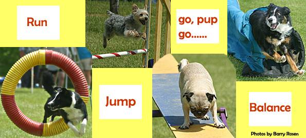 US Dog Agility