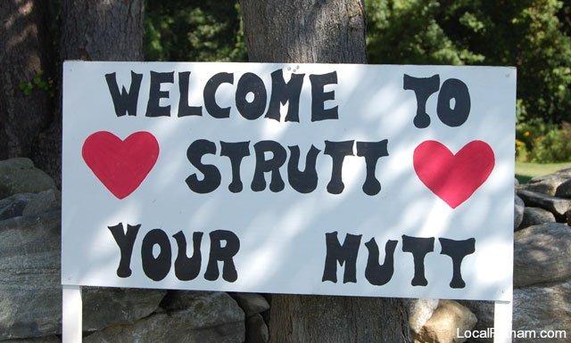 Strutt Your Mutt 2008